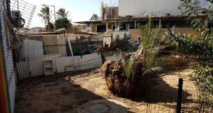 מחסן גרוטאות ועץ שקרס. חצר הבניין